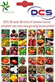 (031) 36 seeds 36 kinds of tomatos Variety complete very tasty easy-growing bonsai potted