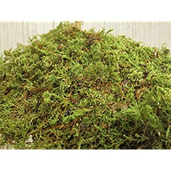 Appalachian Emporiums Live Moss Scraps for Transplant or Use Between Patio Stones Feather Sheet 1 Gallon Bag