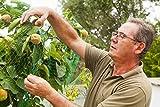 Harvest Plenty Garden Netting to Cover Fruit Trees Plants Ponds - Stop Birds Pests - 33 X 6 Feet - 3 Pack