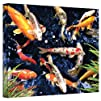 Art Wall 14 by 18-Inch Koi Gallery Wrapped Canvas by George