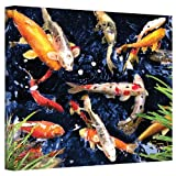 Art Wall 14 by 18-Inch Koi Gallery Wrapped Canvas by George Zucconi