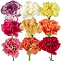 Wholesale Carnations by Vistaflor Fresh Flowers