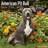 img - for American Pit Bull Terrier Calendar - Only Dog Breed American Pit Bull Terriers Calendar - 2016 Wall calendars - Dog Calendars - Monthly Wall Calendar by Avonside book / textbook / text book
