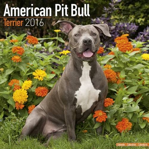 American Pit Bull Terrier Calendar - Only Dog Breed American Pit Bull Terriers Calendar - 2016 Wall calendars - Dog Calendars - Monthly Wall Calendar by Avonside