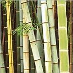 1art1 50653 Pflanzen - Bambus Wald, S...