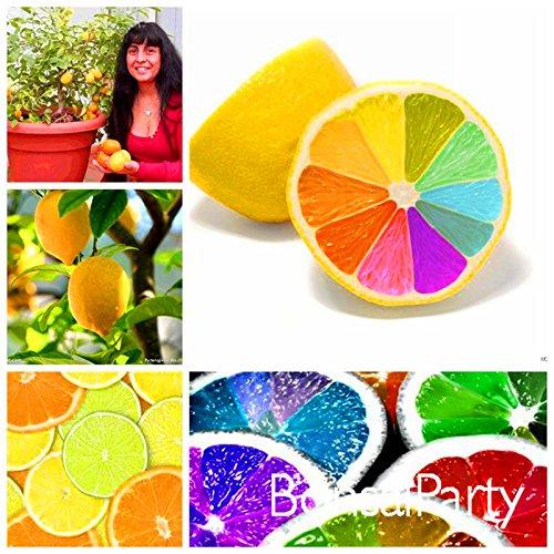 grande-vendita-10-pc-lotto-rari-semi-arcobaleno-limone-frutta-biologica-degli-alberi-di-limone-semi-
