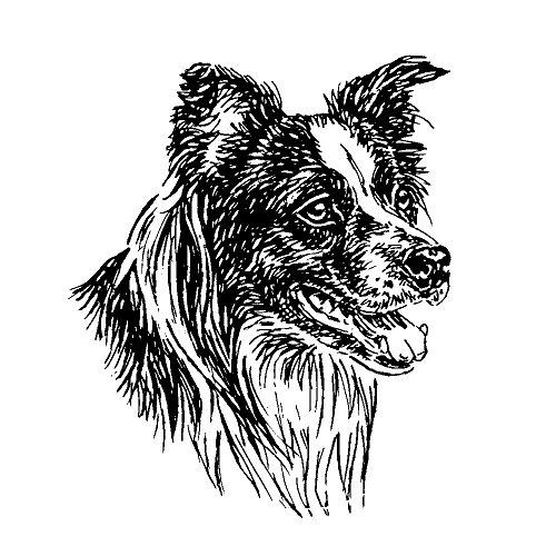 schecker-autoaufkleber-hundeaufkleber-ideal-fur-helle-autos-border-collie
