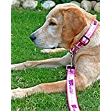 HUFT Bold And Beautiful Martingale Dog Collar & Leash Set-M