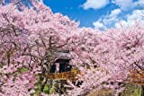 1000ピース ジグソーパズル 桜咲く高遠城址公園 長野 めざせパズルの達人 (50x75cm)