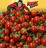"Mighty 'Mato Grafted Sweet Million Tomato Plant - Easy to Grow/More Fruit-4"" Pot"