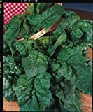 Just Seed - Spinach - Giant Winter - 4000 Seeds - Large Pack