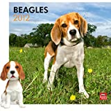 Beagle 2012 Calendar & Bobble Head Gift Set