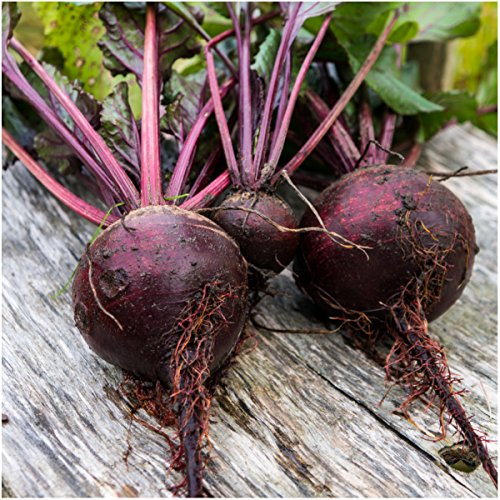 Package of 1,000 Seeds, Detroit Dark Red Beetroot (Beta vulgaris) Non-GMO Seeds By Seed Needs