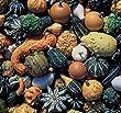 Seed Savers 1049 Gourd Gourd Mixture Seed Packet