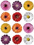 Cakeshop 12 x PRE-CUT Mixed Color Gerberas Edible Cake Toppers