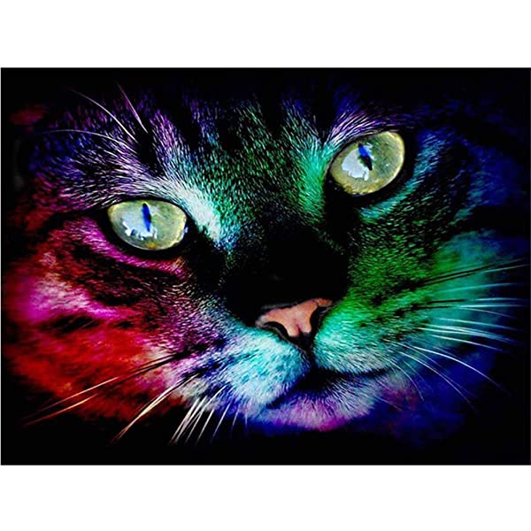 Diy Oil Painting Paint by Number Kit for Adult Kids - Colorful Cat 16X20 Inch,Framed (Color: picture2, Tamaño: Framed)