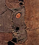 Burri =  the Measure and the Phenomenon : la misura e il fenomeno /