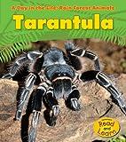Tarantula (A Day in the Life: Rain Forest Animals)