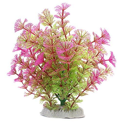 1x-Aquarienpflanzen-787-Wasser-Pflanzen-20-cm-Aquariumvioletgrn