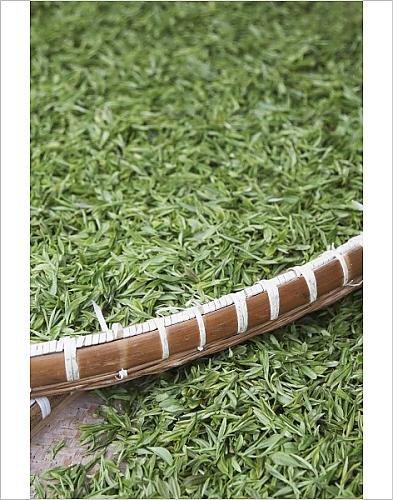 Photographic Print Of Tea Leaves Drying, Longjing, Hangzhou, China, Asia