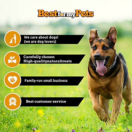 best for my pets odor free 6 inch bully sticks 8 oz pack animals supplies s. Black Bedroom Furniture Sets. Home Design Ideas