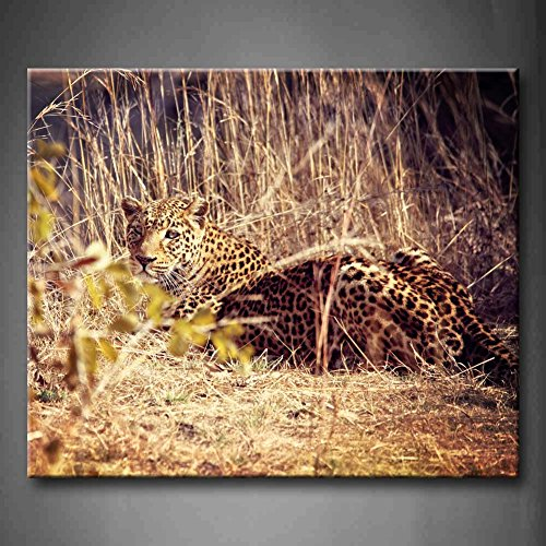 Leopard Portrait Luangwa National Park Zambia Seat In Grassland Wall Art Painting Pictures Print On Canvas Animal The Picture For Home Modern Decoration (Stretched By Wooden Frame,Ready To Hang)