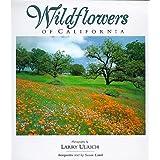 Wildflowers of California ~ Susan Lamb
