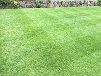 1kg Grass Seed covering 40 sqm, High quality, Fast growing and Hard wearing grass seed, Tailored to UK climate from Just Grass Seed.