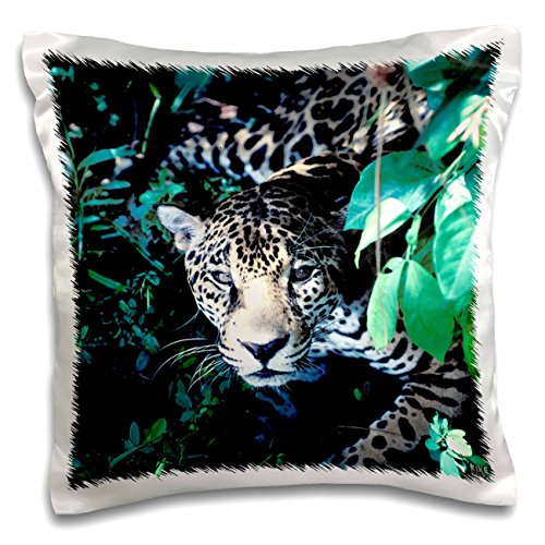 Embark Animal Pillow : Pictures Of Animals In The Rainforest