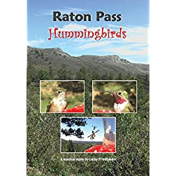 """Raton Pass Hummingbirds""  VIDEO"