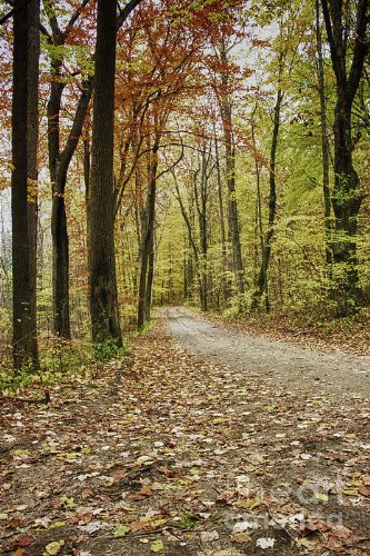 Dirt Road Running through Forest in Autumn