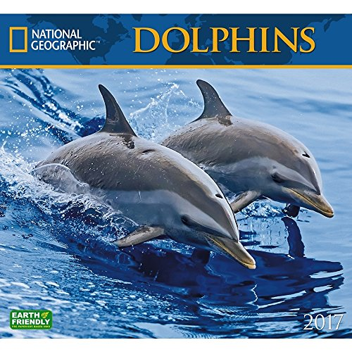 Dolphin Items