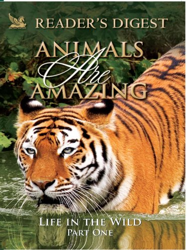 animals-are-amazing-life-in-the-wild-part-one
