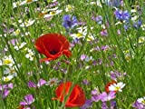 Just-Seed-Wild-Flower-Cornfield-Annual-Flower-Special-Mix-4g