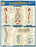 Anatomy 2 (Quickstudy: Academic)