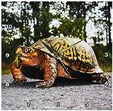 3dRose dpp_92471_1 New Jersey, Great Swamp NWR Eastern Box Turtle - US31 JGL0022 - Jim Gilbert - Wall Clock, 10 by 10-inch