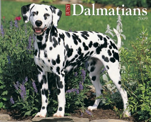 Just Dalmations Calendar (Just (Willow Creek))
