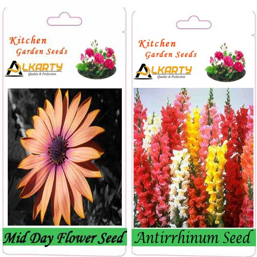Alkarty Mid Day And Antirrhinum Flower Seeds Pack Of 20 (Winter)