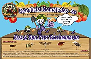10 million live beneficial nematodes sc for Beneficial nematodes for termites