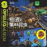 カプセルQミュージアム 樹液に集まる昆虫 真夏の夜の宴 全6種セット