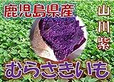 鹿児島県産 むらさきいも 紫芋 「山川紫」 1箱:5kg サイズ:M~2L混合 新芋(2016年産)