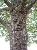 Genuine Tree Peeple Mr. Mapleshade Tree Face