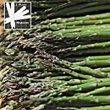 Jersey Supreme Asparagus (Organic/heirloom) 325 Seeds Upc 646263363027 + 2 Plant Markers