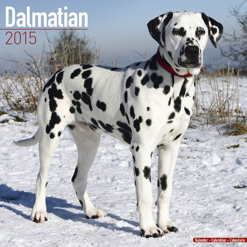 Dalmatian Calendar - Only Dog Breed Dalmatian Calendar - 2015 Wall calendars - Dog Calendars - Monthly Wall Calendar by Avonside