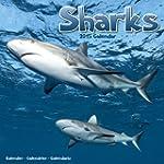 Sharks Calendar - 2015 Wall calendars...