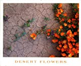 img - for Desert Flowers: 20 Ready-to-mail Postcards (Desert Flowers) book / textbook / text book