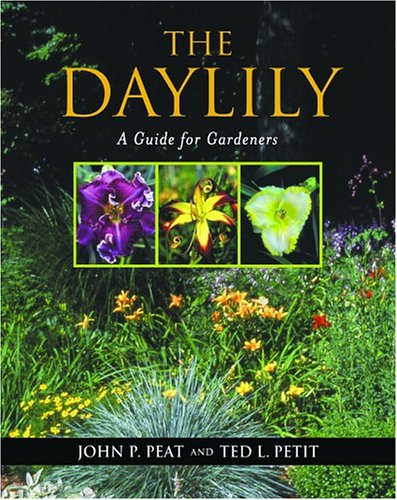 The Daylily