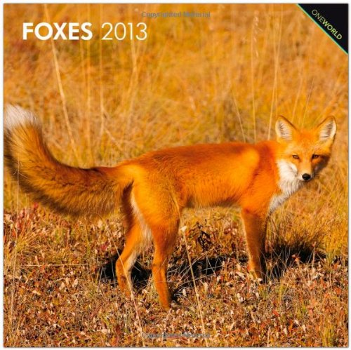 Foxes 2013 Square 12X12 Wall Calendar