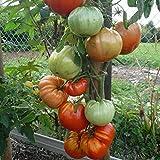 10 Samen Monomakh Crown Tomate - russische Stabtomate