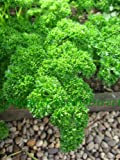 Premier Seeds Direct ORG054 Parsley Triple Moss Curled 2 Organic Seeds (Pack of 1600)